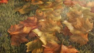 bc.leafs