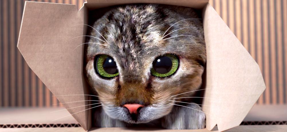 Cat Splash Fever — blender org
