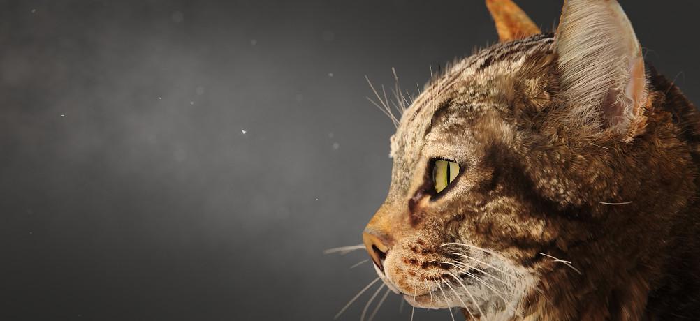 Kitty In A Blender ~ Cat splash fever blender home of the