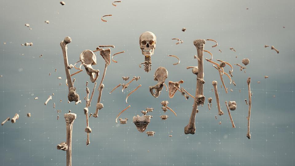 vida_16_Bones